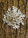 Lichen growing on wood in forest Stock Image