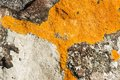 Lichen orange en gros plan sur la pierre Photos stock