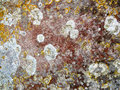 Lichen on stone. Royalty Free Stock Photo
