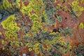 Lichen sur la roche Photos libres de droits