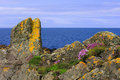 Lichen and Thrift growth, coastal rocks Stock Images