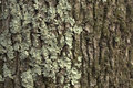 Lichen on a tree trunk Royalty Free Stock Photography