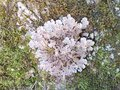 Lichen on a tree trunk and moss cover s Royalty Free Stock Images
