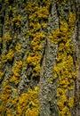 Lichens bark texture dark detail macro close up Royalty Free Stock Images