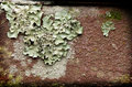 Lichens on brick macro photo of a red Stock Image