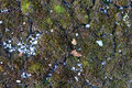 Lichens are filmed in yambol Royalty Free Stock Image