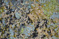 Lichens a rock colored by nature Royalty Free Stock Photos
