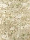 Lichens on tree bark texture Stock Photo