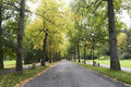 Lichtentaler avenue in baden baden germany the famous with the old trees Stock Image