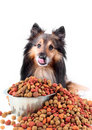 Licking dog with spilling food Stock Photo