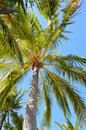 Life is a beach palm tree daydream exotic Stock Image