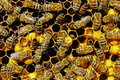 Life of bees. Reproduction of bees. Royalty Free Stock Photo