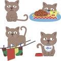 Life cute gray cat