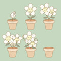 Life cycle illustration of flower growth demonstration Royalty Free Stock Image