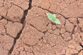 Life and drought shoot of young grass bud on soil Stock Images