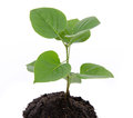 Life and growth concept with a green small plant Royalty Free Stock Photo