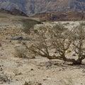 Life in a lifeless desert