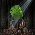 Life Renewal Royalty Free Stock Photo