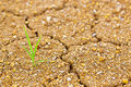 Life and struggle on dried land Royalty Free Stock Photo