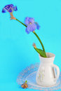 Lifecycle still life symbolic with purple iris in vase on old fashioned doily illustrating three phases of a dead bloom lying on Stock Photos