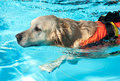 Lifeguard dog Royalty Free Stock Photo