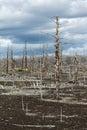 Lifeless desert landscape of Kamchatka: Dead wood (Tolbachik Vol Royalty Free Stock Photo