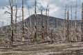 Lifeless desert landscape of Kamchatka Peninsula: Dead wood (Tol Royalty Free Stock Photo