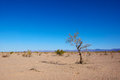 Lifeless desert lone withered tree stands alone in an arid empty Royalty Free Stock Photo