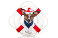 Lifesaver dog Stock Photography