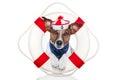 Lifesaver dog Royalty Free Stock Photo