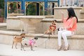 Lifestyle image in south florida a woman and her three dogs out for a walk Stock Image