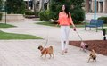 Lifestyle image in south florida a woman and her three dogs out for a walk Royalty Free Stock Photography