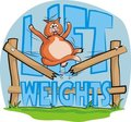 Lift weights - fat cat Royalty Free Stock Photography