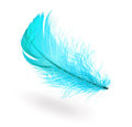 Light blue feather Royalty Free Stock Photo