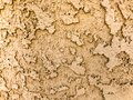 Light brown stucco texture background 5004 Royalty Free Stock Photo