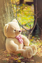 A light brown teddy bear Royalty Free Stock Images