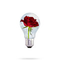 Light bulb with beautiful rose flower. Stock Image