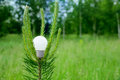 Light bulb on a branch of pine Stock Photography