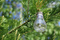 Light bulb on a branch of pine Stock Photos