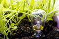 Light bulb grow with the grass Stock Images