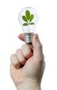 Light bulb leaf Stock Photos