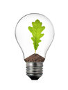 Light bulb with oak leaf inside Stock Image