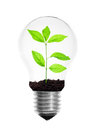 Light bulb with plant Stock Photo