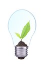Light bulb with soil and young green plant isolated on white Stock Image