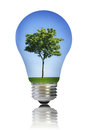 Light bulb with tree Royalty Free Stock Photo