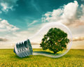 Light bulb with a tree inside Royalty Free Stock Photo