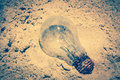 Light bulb was throw away on the beach. Royalty Free Stock Photo