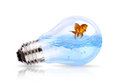 Light bulb with water and fish inside Royalty Free Stock Photo