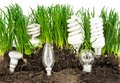 Light bulbs, energy-saving lamps, grass and earth Royalty Free Stock Photo