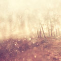 Light burst among meadow trees filtered image Stock Photos